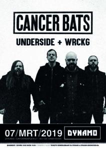 Flyer Cancer Bats